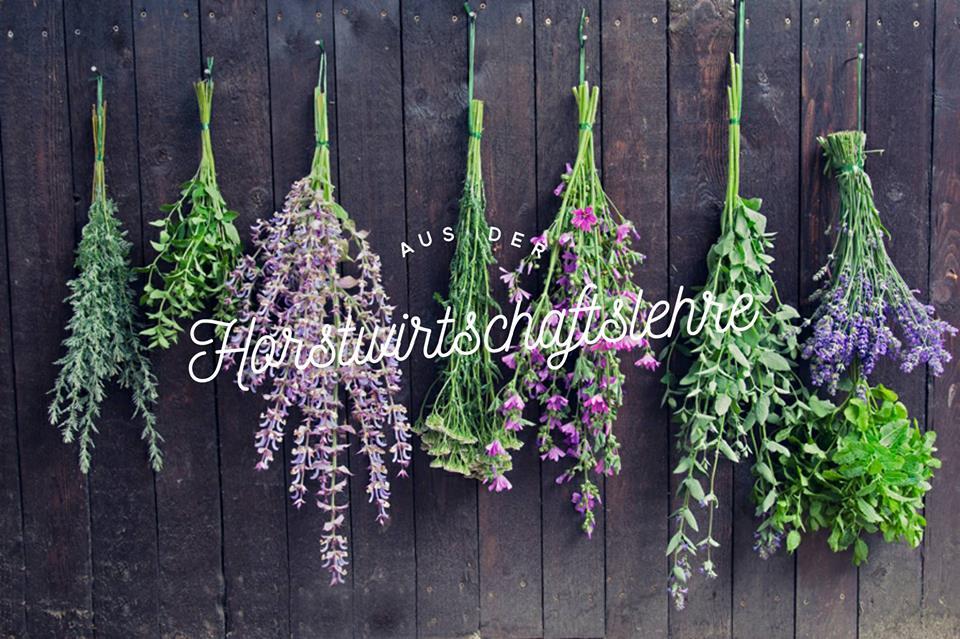 Blüten und Düfte – die Vielfalt unserer Kräuter (von Burkhard Bohne)