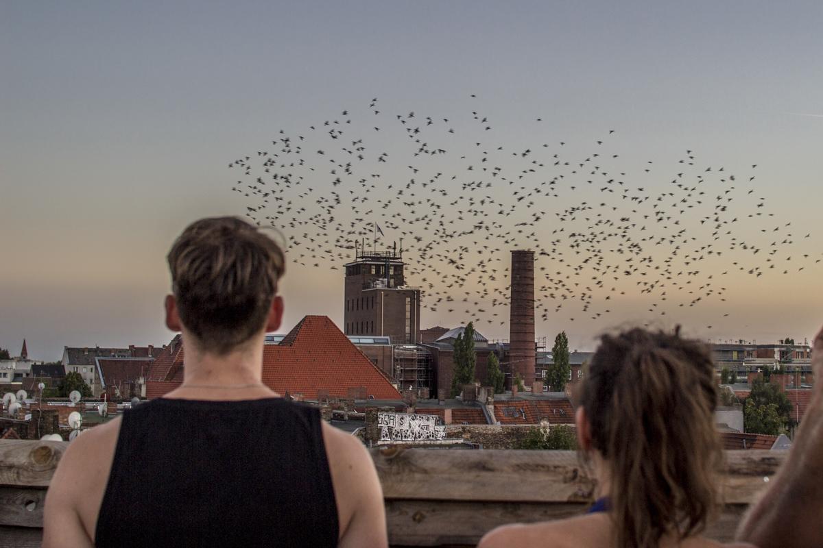 Von Kranichen und anderem Gefieder: Birdwatching