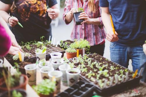 Heilkräuter im Garten – so können sie wachsen